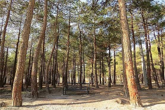 تنش های آبی علت خشک شدن درختان پارک چیتگر